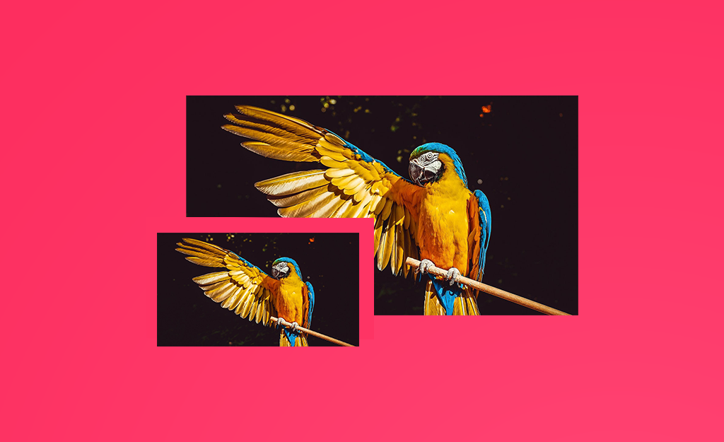Uploaded small and big pictures of the same bird image